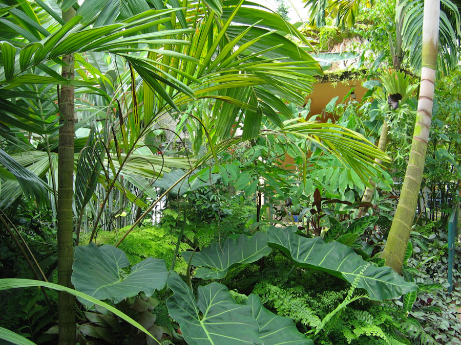 Tropical plants and ferns surrounding palm trees keywords tree plant
