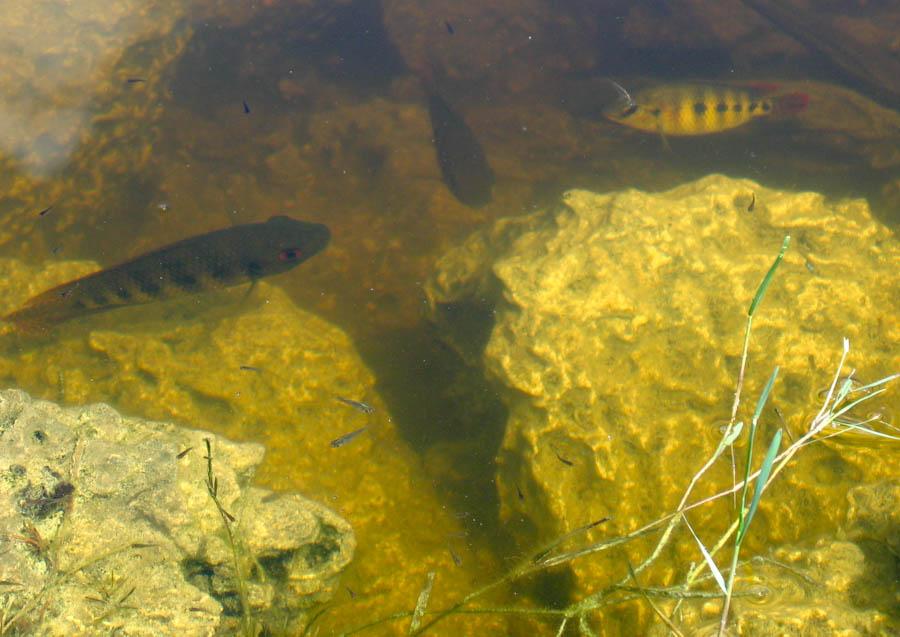 Fish and minnows for Florida lake fish