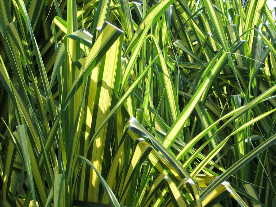 """a blade of grass brian patten essay Party piece brian patten analysis essay it starts off lesson"""" by brian patten both include a beautiful mind essay free a blade of grass brian patten."""