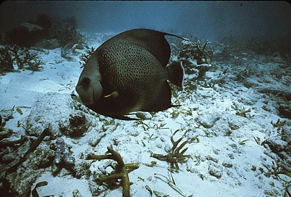 Fish at john pennekamp coral reef state park for Florida state fish