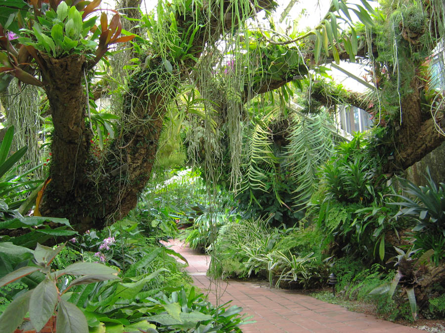 Epiphytes for Unusual trees for small gardens