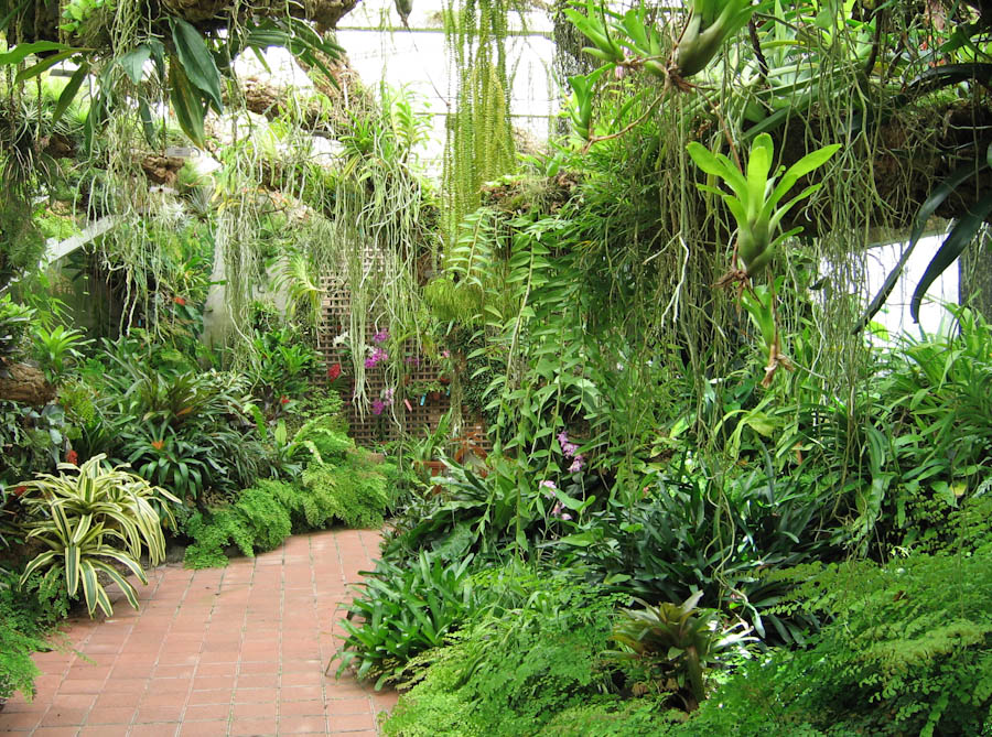 Tropical plant conservatory for Botanical garden design