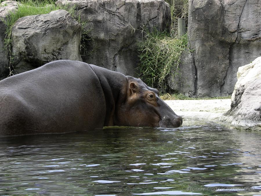Image Result For Busch Gardens Fl Animals
