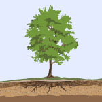 Icon of a treet and its roots