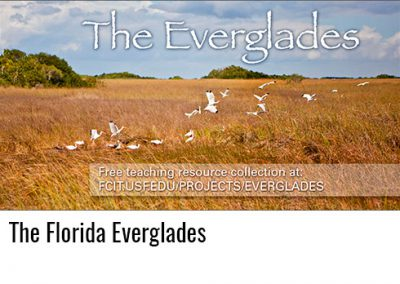 Everglades Teaching Collection