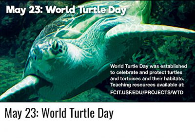 May 23: World Turtle Day