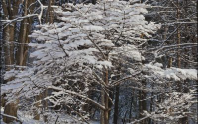 Photo of the Month: A Tree in Winter