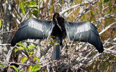 Photo of the Month: What is this bird doing?