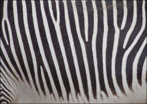 Photo of the Month: Why Stripes?